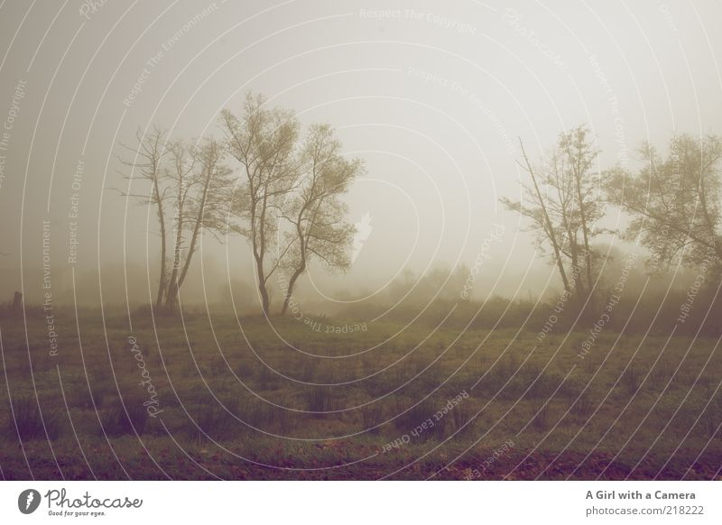 Nature White Tree Plant Cold Autumn Grass Gray Dream Brown Field Fog Environment Sleep Gloomy Authentic