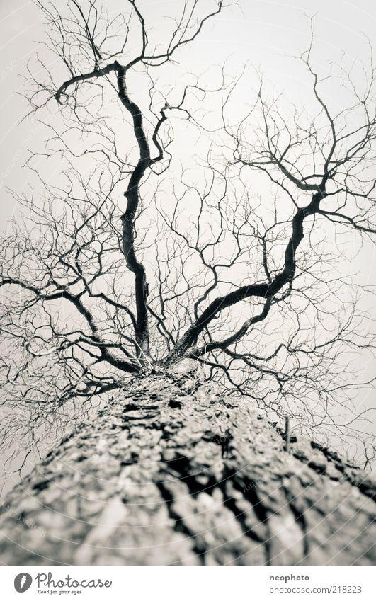 Tree Winter Autumn Weather Gloomy Tree trunk Bleak Climate change Branchage Tree bark Contrast Leafless Skyward