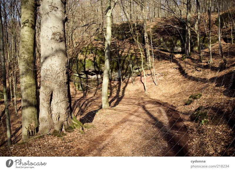Nature Tree Leaf Calm Forest Relaxation Life Autumn Environment Freedom Movement Lanes & trails Contentment Time Rock Change