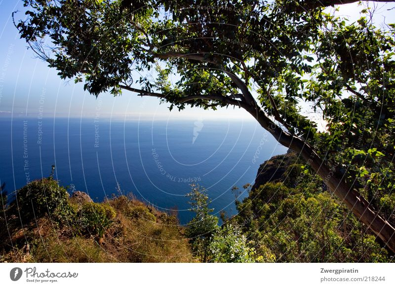 summer longing Nature Water Horizon Sunlight Summer Beautiful weather Plant Tree Bushes Rock Coast Cliff Relaxation Growth Fantastic Gigantic Infinity Dry Blue