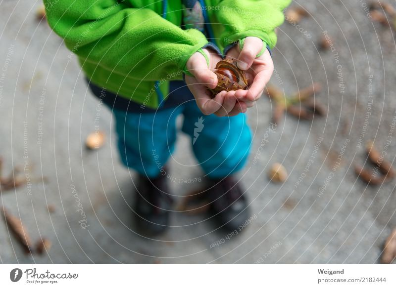 chestnut marble Harmonious Well-being Relaxation Calm Child Toddler Girl Boy (child) Infancy 1 Human being Happy Curiosity To console Grateful Autumn