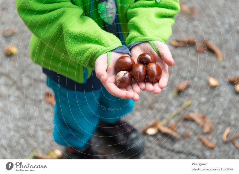 autumn treasure Kindergarten Child Schoolchild Toddler Girl Boy (child) Infancy 3 - 8 years Autumn To hold on Together Brown Conscientiously Caution Serene