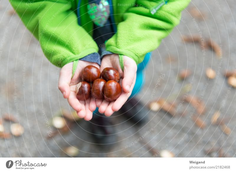 Child Human being Hand Girl Autumn Boy (child) Family & Relations Happy Glittering Infancy Success Study Observe Discover Collection Toddler