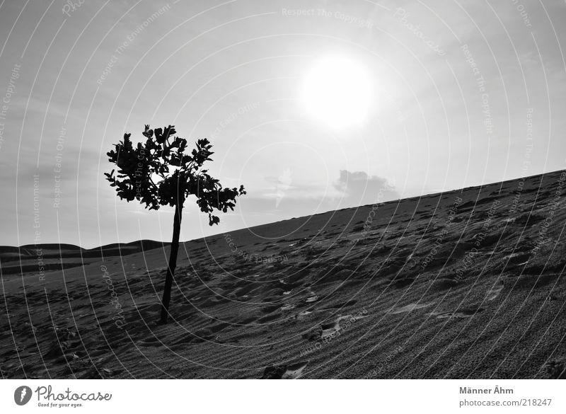 Nature Sky White Tree Sun Plant Summer Vacation & Travel Black Dark Sand Landscape Weather Environment Free Earth