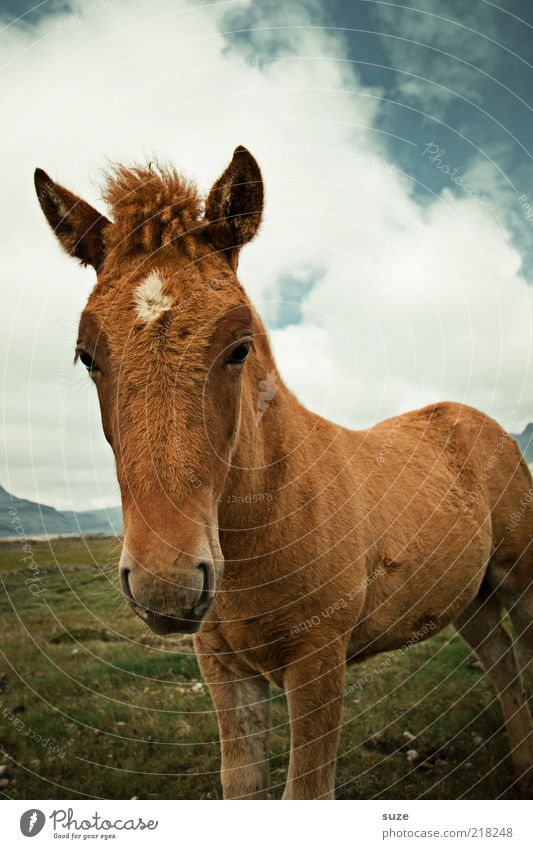 Sky Nature Beautiful Animal Clouds Environment Meadow Baby animal Brown Natural Wild Wild animal Free Cute Horse Curiosity
