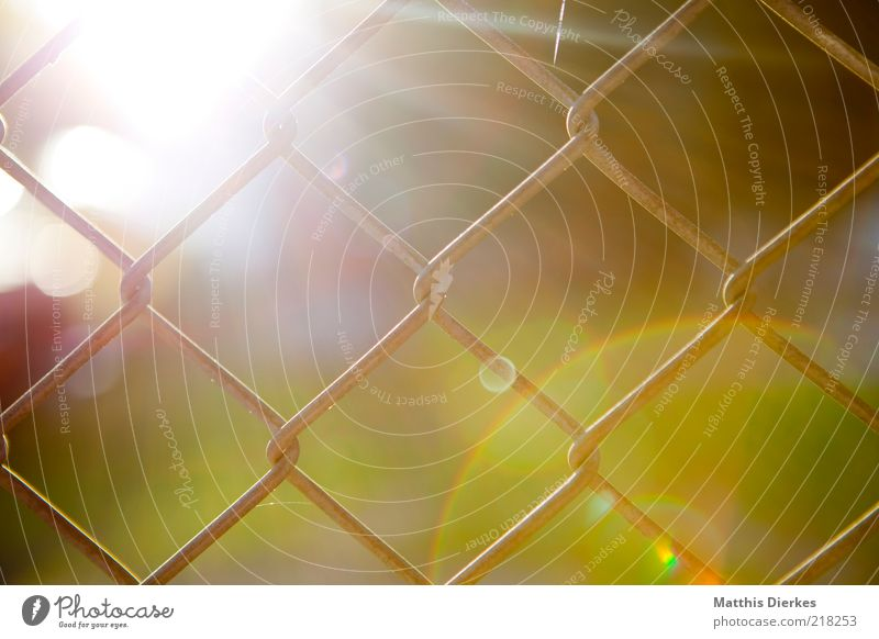 Nature Sun Autumn Environment Esthetic Fence Captured Light Lens flare Sunset Wire netting fence Wire netting Sunspot