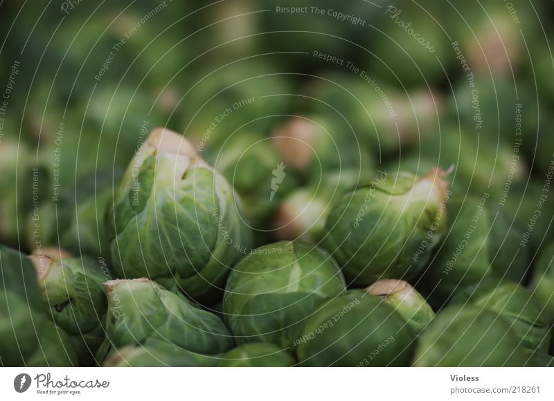 son cabbage (Brussels sprouts) Food Nutrition Healthy Green Cabbage brassica Milkwort family Vegetable Colour photo Close-up Many Multiple Natural Ecological