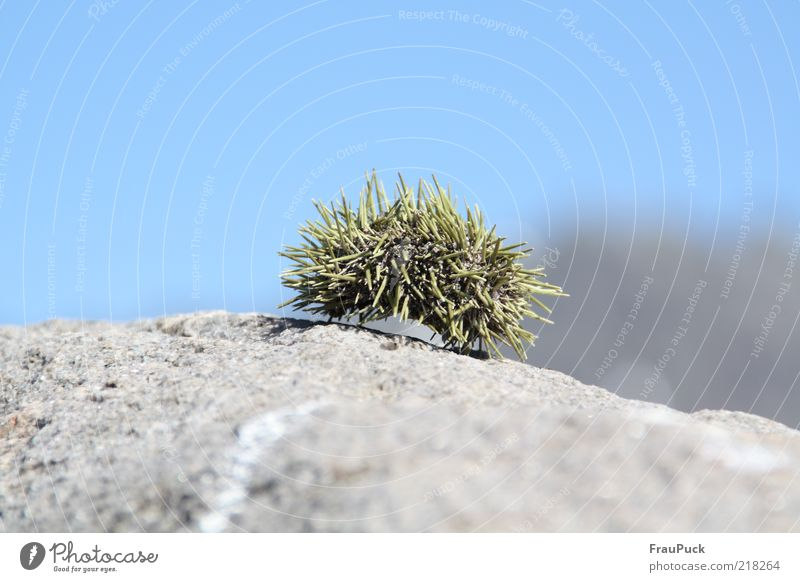 Water Green Gray Stone Rock Lie Point Beautiful weather Blue sky Thorny Sea urchin Dead animal
