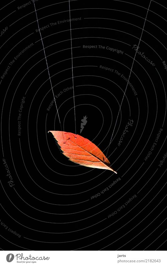 Nature Leaf Autumn Exceptional Flying Rope Hang Sewing thread Weightlessness