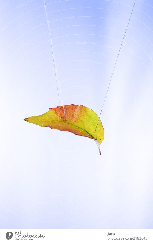 Nature Leaf Autumn Exceptional Beautiful weather To fall Hang Sewing thread Hover Hang up