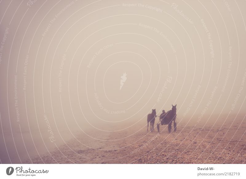 Out of the fog Life Leisure and hobbies Adventure Far-off places Human being Masculine Man Adults 1 Bad weather Animal Farm animal Horse Running Horseracing