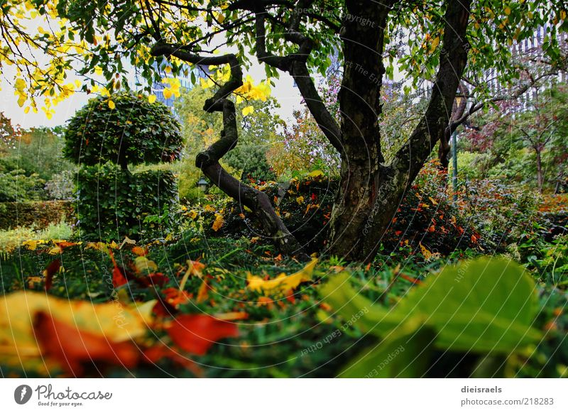 Nature Beautiful Tree Green Plant Calm Leaf Relaxation Autumn Garden Park Landscape Brown Fresh Growth Bushes