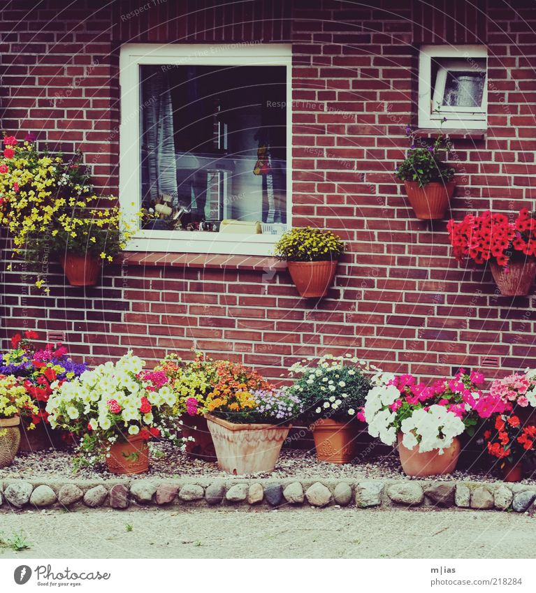 Flower Window Garden Section of image Rural Cliche Flowerpot Characteristic Detached house Window box Brick-built house