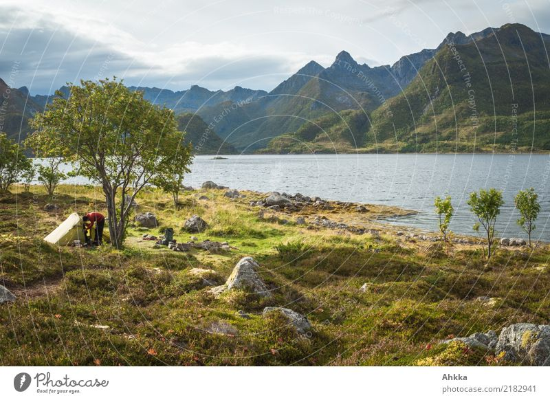 Green tent under a tree in front of a mountain panorama, Lofoten Vacation & Travel Adventure 1 Human being Nature Landscape Elements Tree Bushes Mountain Coast