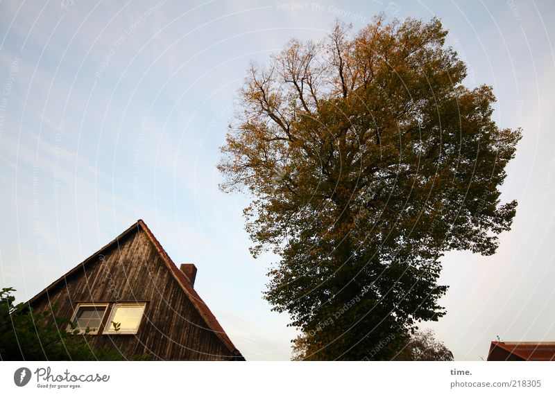 Tree Plant Leaf House (Residential Structure) Autumn Window Roof Beautiful weather Chimney Treetop Gable Wooden facade