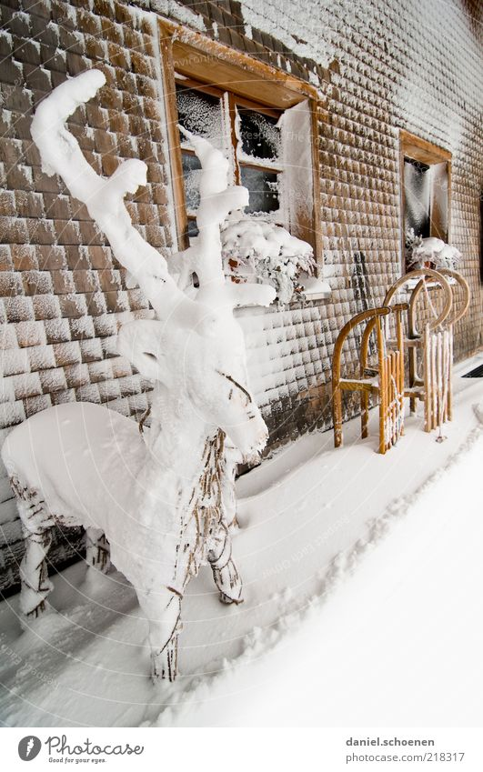 Christmas & Advent Winter Cold Snow Window Wood Ice Bright Facade Trip Frost Climate Decoration Antlers Deer