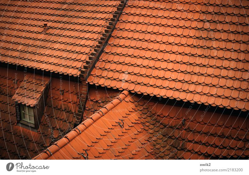 Meissen from above Germany Roof Skylight Roofing tile Red Closed Many Colour photo Exterior shot Detail Pattern Structures and shapes Deserted Copy Space right