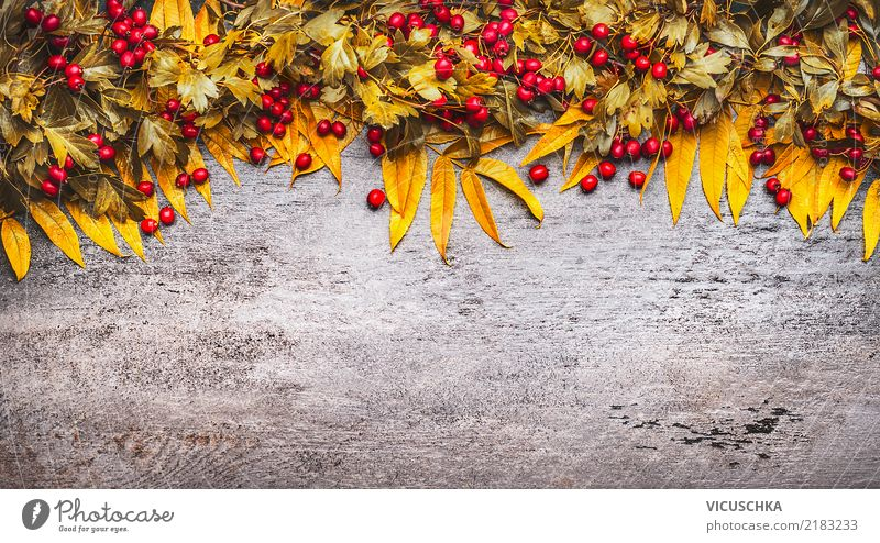 Background with garland of autumn leaves and berries Style Design Thanksgiving Nature Plant Autumn Bushes Leaf Blossom Decoration Sign Yellow Background picture