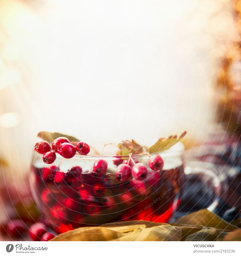 Nature Healthy Eating Relaxation Winter Life Autumn Background picture Style Food Design Living or residing Beverage Rose Harmonious Medication