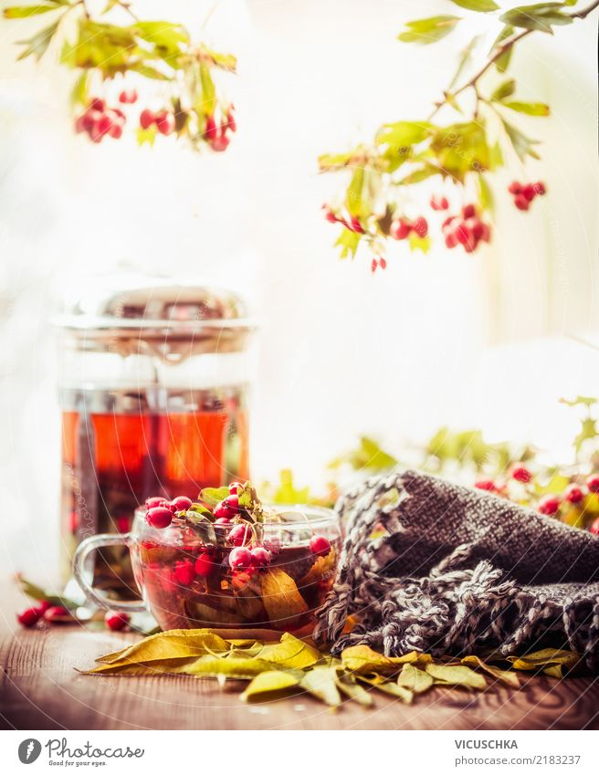 Autumn tea on the garden table Food Beverage Hot drink Tea Cup Lifestyle Style Design Alternative medicine Healthy Eating Winter Christmas & Advent Nature