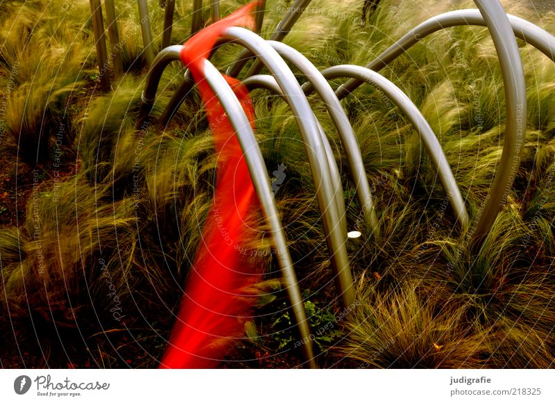 Nature Red Plant Dark Grass Moody Metal Art Elegant Natural Mysterious String Stalk Motion blur Whimsical Rod