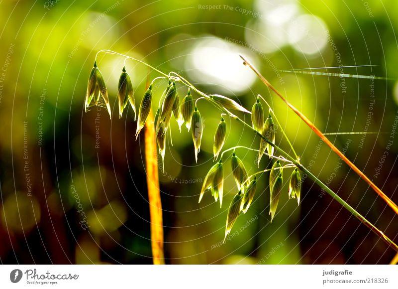 Nature Beautiful Green Plant Grass Moody Environment Growth Wild Delicate Natural Stalk Blossoming Illuminate Cobwebby