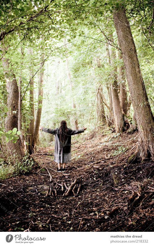 Human being Nature Tree Plant Summer Flower Leaf Forest Relaxation Dark Environment Landscape Arm Wait Masculine Wild