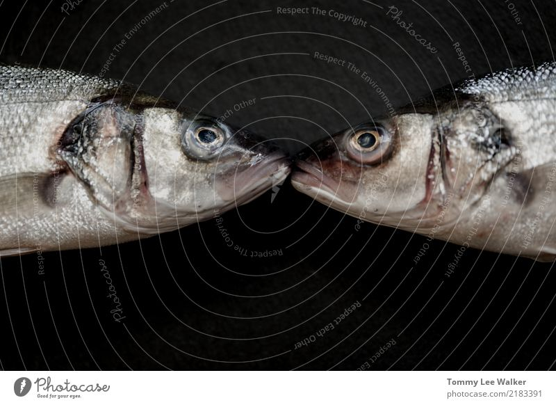 We are in love Nature White Ocean Animal Face Love Happy Couple Wild Fresh Heart Mouth Romance River Stripe Card