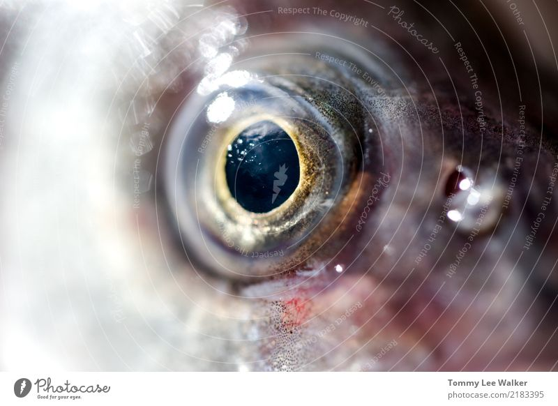 I'm watching you Nature Vacation & Travel Ocean Life Wild Fresh Vantage point Skin Wet Eyelash Cry Tropical Extreme Iris Black Holes Sea Bass