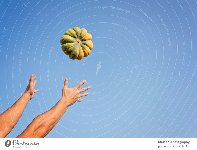 Hands of a man throwing a ripe pumpkin Sky Man Blue Adults Lifestyle Autumn Movement Feasts & Celebrations Flying Copy Space To enjoy Authentic Agriculture