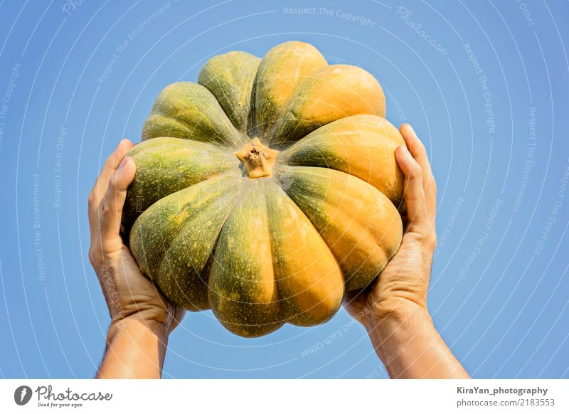 Male hands holding a ripe pumpkin Sky Man Blue Summer Hand Adults Lifestyle Autumn Movement Garden Feasts & Celebrations Orange Success To enjoy To hold on