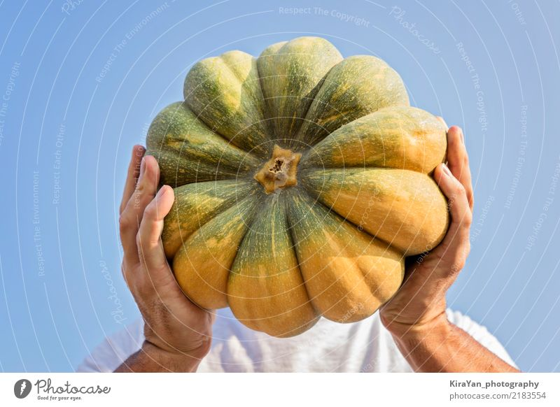 The farmer's hands hold a large pumpkin Sky Man Blue Sun Hand Joy Adults Autumn Playing Freedom Authentic To hold on Agriculture Vegetable Farm Harvest