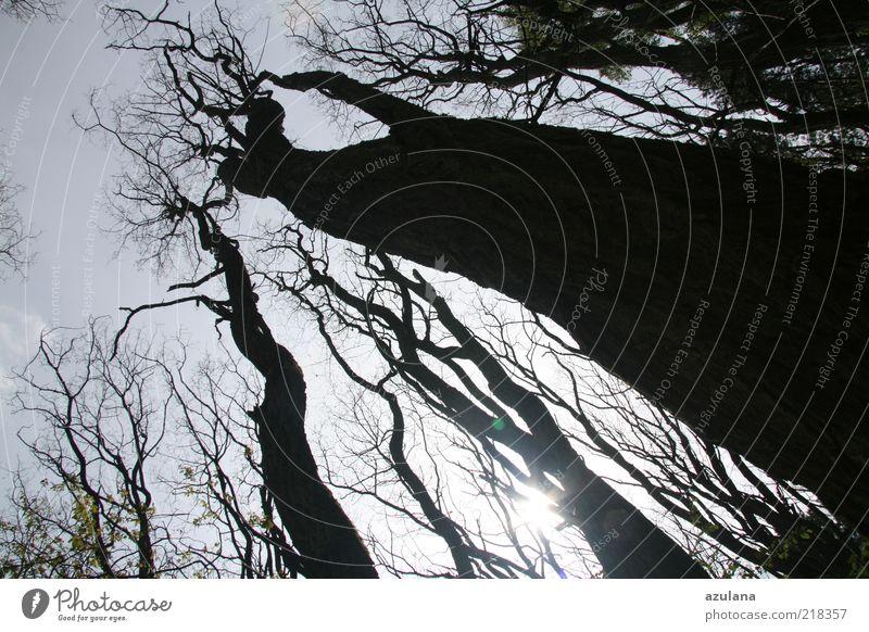 Old Tree Winter Calm Black Forest Wood Sadness Power Threat Tree trunk Elements Beautiful weather Harmonious Tree bark