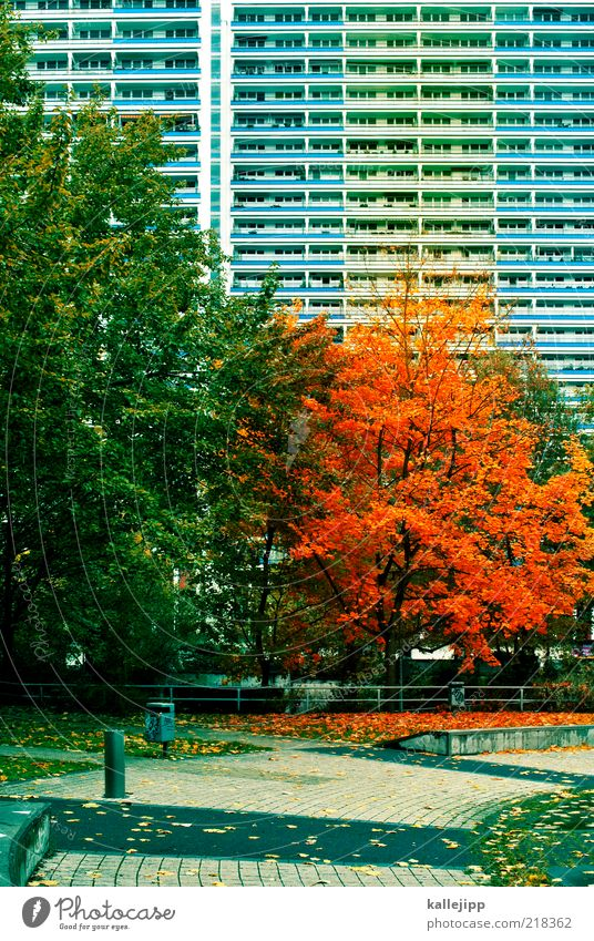 Nature City Tree Leaf House (Residential Structure) Environment Autumn Park Climate Facade High-rise To fall Cobblestones Prefab construction Trash container