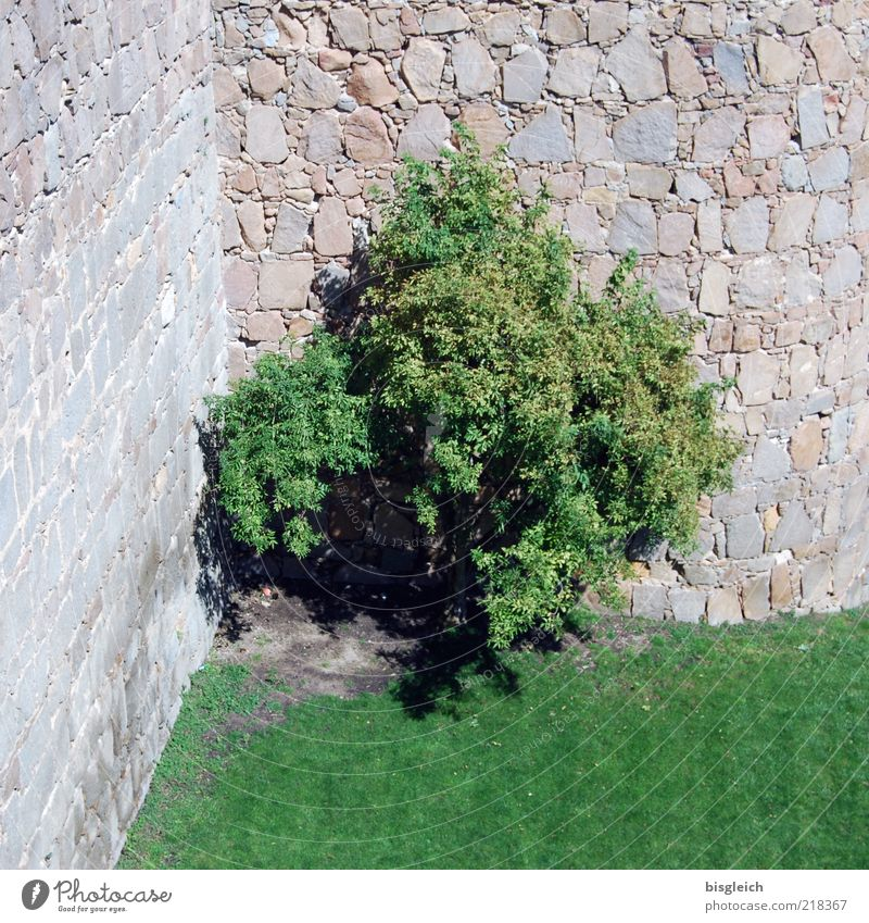 corner posters Tree Meadow Wall (barrier) Stone Gray Green Colour photo Exterior shot Deserted Day Castle wall Stone wall 1 Individual Corner