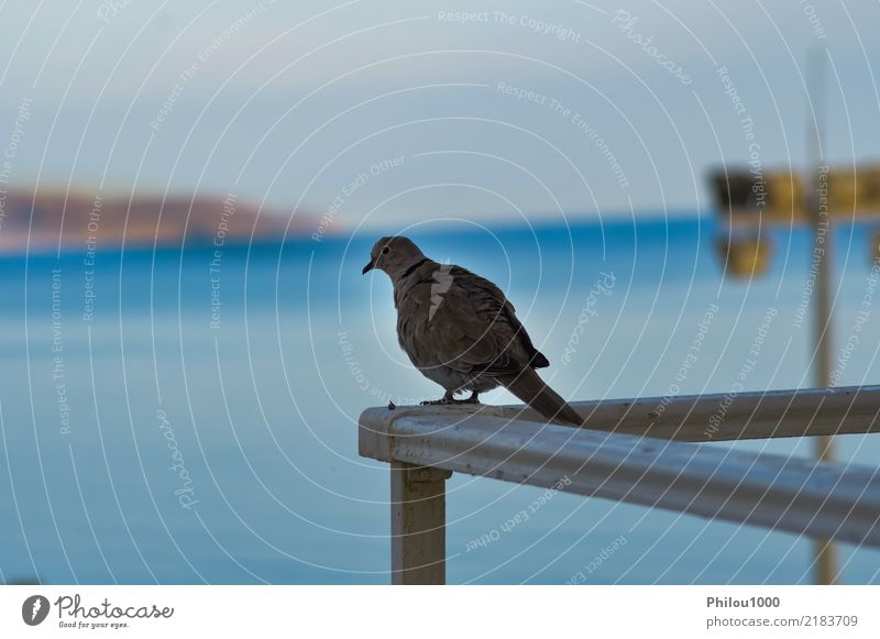 Pigeon posed on the corner of the railing Sky Nature Blue White Animal Clouds Black Religion and faith Love Freedom Group Flying Bird Vantage point Feather