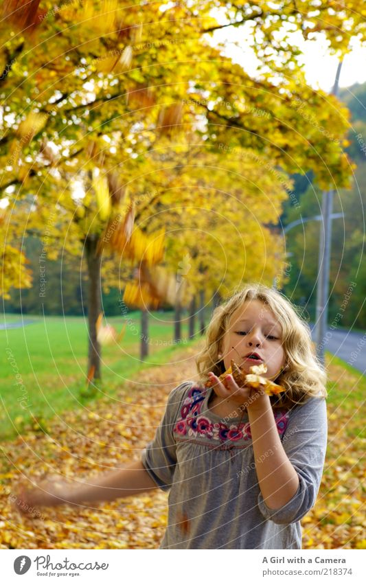 blow Human being Infancy Life Mouth Hand 1 Nature Plant Autumn Leaf Playing Brash Happy Uniqueness Multicoloured Yellow Gold Roadside Footpath Blow Blonde Tree