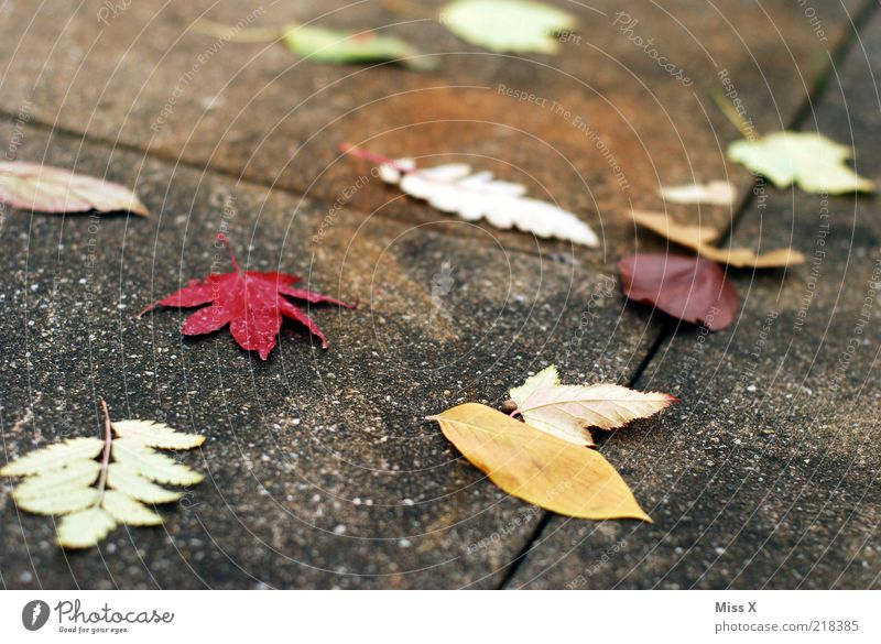 Nature Leaf Autumn Wind Climate Sidewalk Autumn leaves Bad weather Weathered Autumnal To dry up Autumnal colours Concrete slab Slippery surface