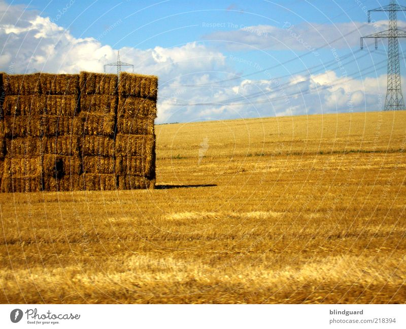 Golden Autumn Landscape Sky Clouds Summer Beautiful weather Agricultural crop Field Blue Yellow Energy Feed Straw Bale of straw High voltage power line