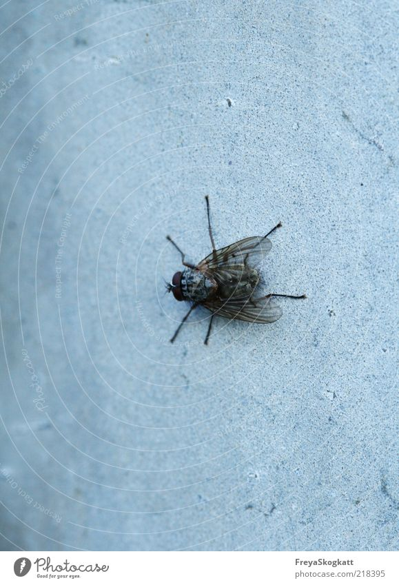 Nature Black Animal Cold Wall (building) Gray Legs Wait Small Fly Sit Wing Insect Crawl Graceful Patient