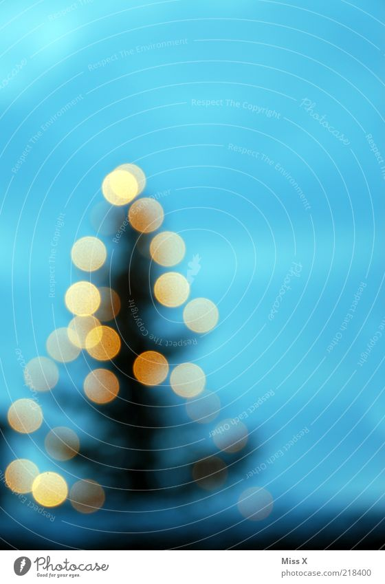 Christmas & Advent Tree Winter Lighting Glittering Christmas tree Fir tree Illuminate Christmas decoration Fairy lights Feasts & Celebrations