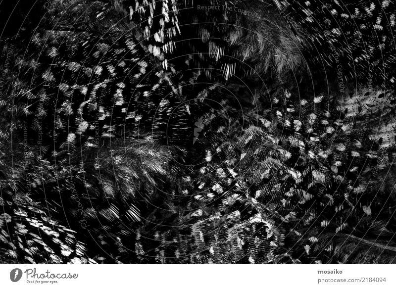 black feathers Nature Beautiful White Animal Black Lifestyle Natural Style Fashion Gray Bird Design Decoration Elegant Feather Beauty Photography