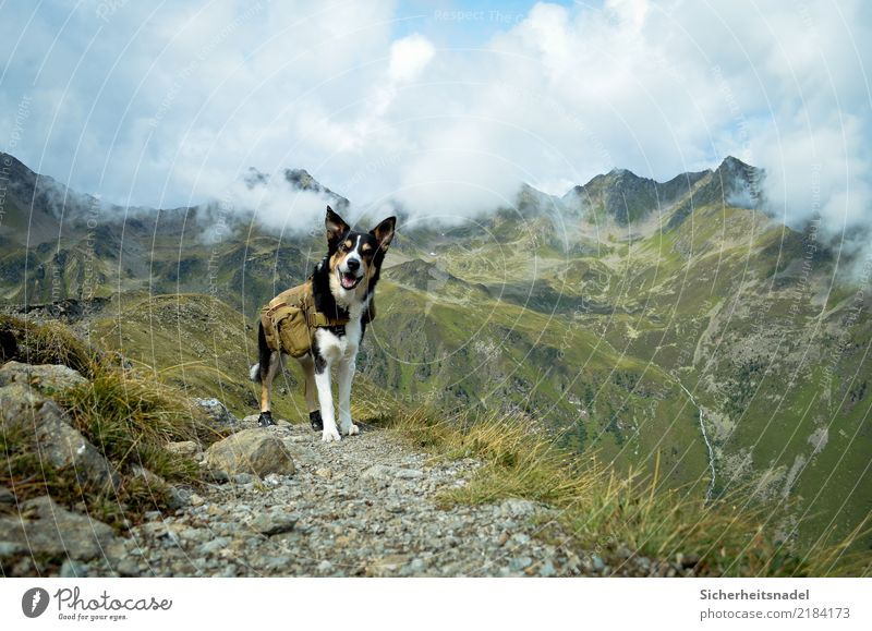 Nature Vacation & Travel Dog Summer Animal Clouds Mountain Rock Going Leisure and hobbies Hiking Joie de vivre (Vitality) Adventure Beautiful weather Curiosity