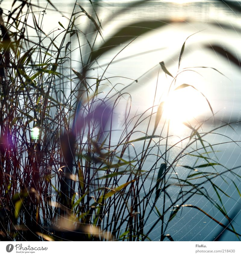 Nature Water Sun Plant Leaf Autumn Grass Lake Bright Coast Glittering Environment River Warm-heartedness Common Reed Lakeside