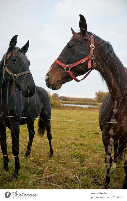 Nature Summer Black Animal Meadow Landscape Brown Pair of animals Free Horse Stand Leisure and hobbies Pasture Bay (horse) Opposite Mount