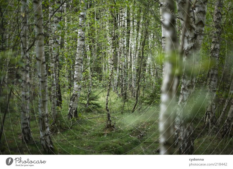 birch forest Well-being Relaxation Calm Freedom Environment Nature Tree Forest Uniqueness Mysterious Idyll Life Sustainability Beautiful Stagnating Dream