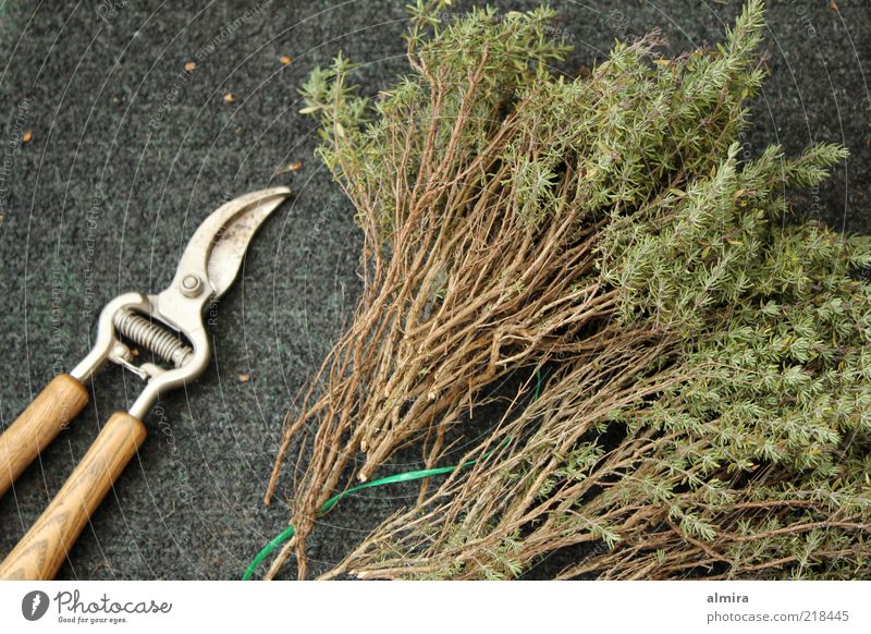 fragrance bundles Herbs and spices Gardening Scissors Bushes Agricultural crop Dry Brown Gray Green Colour photo Exterior shot Deserted Day Gardening equipment