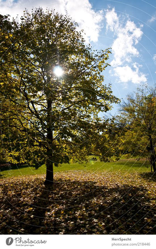 Yesterday at the Prater Nature Landscape Sky Clouds Sun Autumn Beautiful weather Tree Grass Leaf Park Meadow Blue Yellow Green Autumn leaves Autumnal
