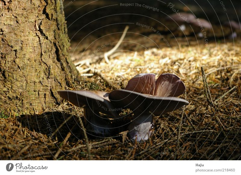 mushrooms Nature Autumn Mushroom cap Moody Forest Woodground Subdued colour Exterior shot Detail Deserted Day Sunlight Shallow depth of field