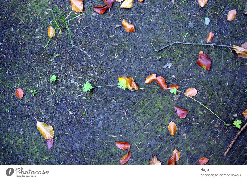 Nature Calm Leaf Life Autumn Emotions Style Grass Moody Dirty Earth Ground Transience Uniqueness Mysterious Autumn leaves
